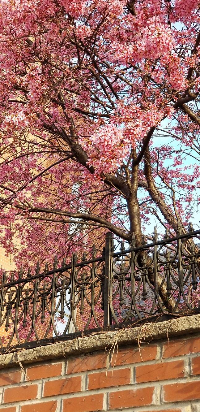 Springtime so fine